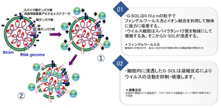 G・SOL®(ジーソルR)の殺ウイルスメカニズム